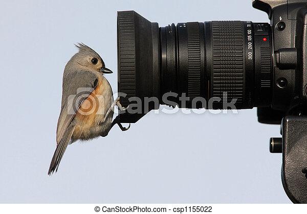 Pájaro en una cámara - csp1155022