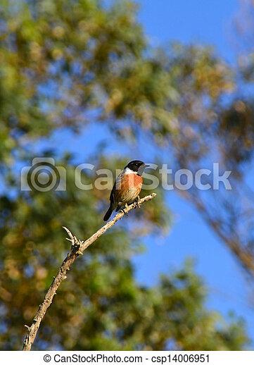 Un pájaro en una rama - csp14006951