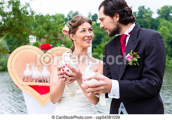 párosít, fehér, lakodalmi, gerle, esküvő - csp54381039