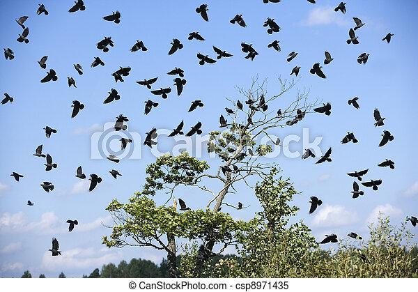 pássaros - csp8971435
