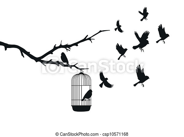 pássaros - csp10571168