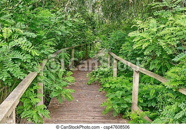 pântano, andar, caminho - csp47608506