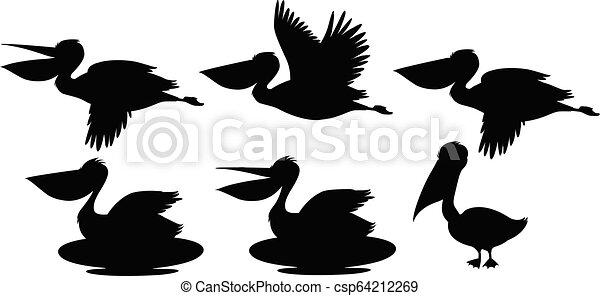pélican, ensemble, silhouette - csp64212269