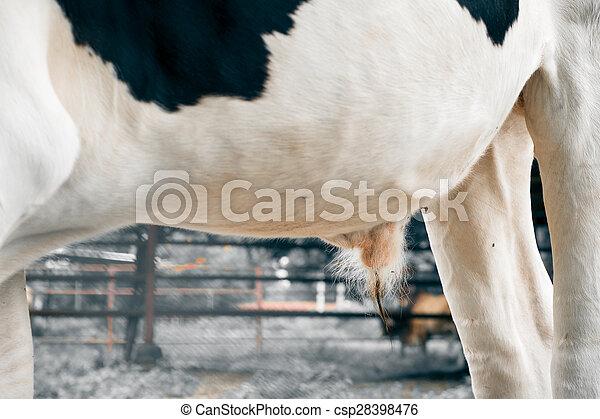 Csajok titeket taszít a tehén foltos pénisz?