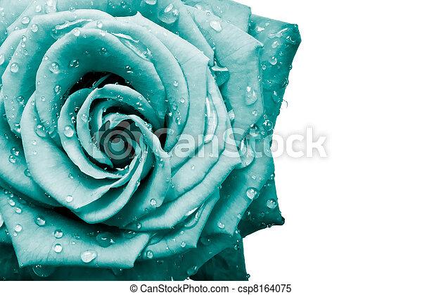 pétalas rosa - csp8164075