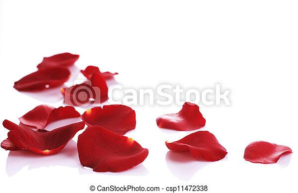 Los pétalos de rosas bordean - csp11472338