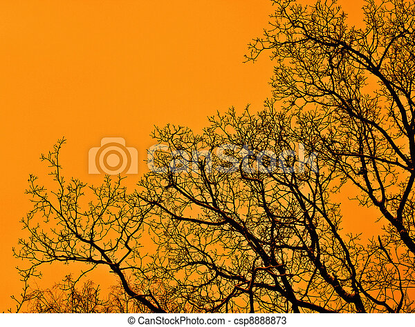 pôr do sol, floresta - csp8888873
