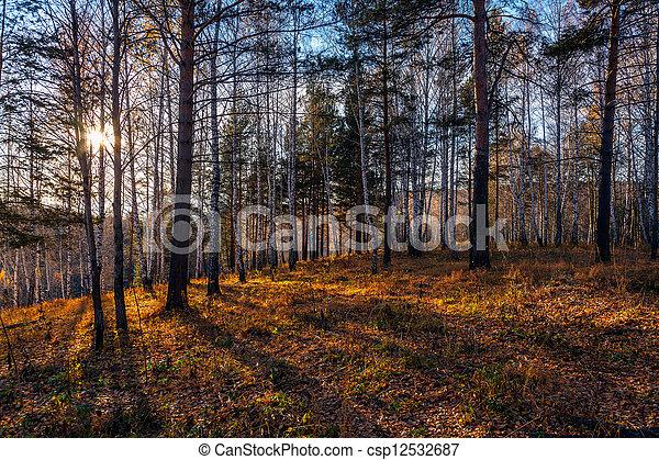pôr do sol, floresta - csp12532687