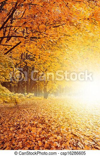 pôr do sol, parque, outono - csp16286605