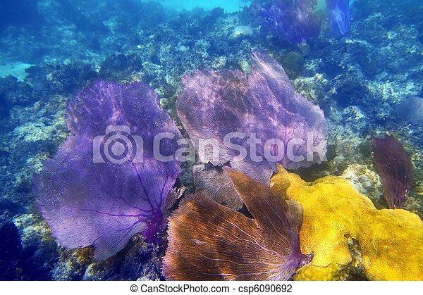 púrpura, coral, ventilador, gorgonian, mar - csp6090692