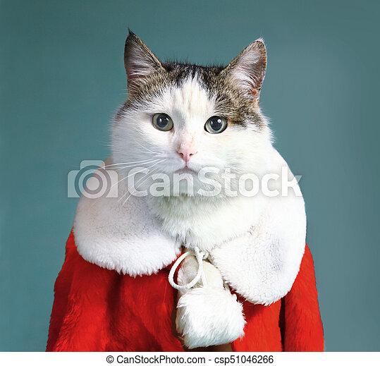 płaszcz, część garderoby, claus, kot, święty, samiec, chłodny - csp51046266