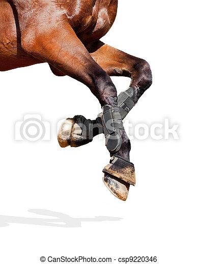 paarde, benen, vrijstaand, white. - csp9220346