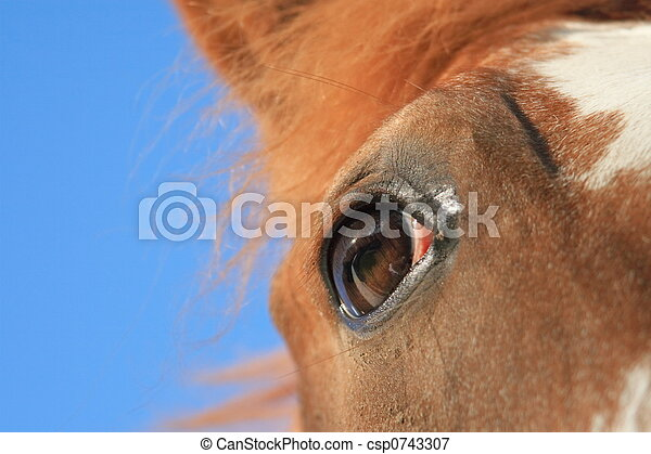 paarde, geest - csp0743307