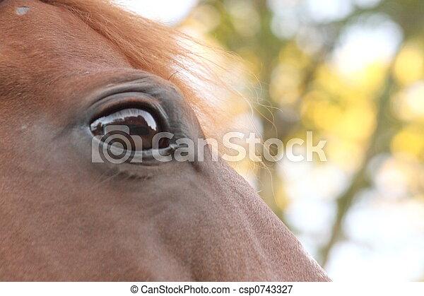 paarde, trots - csp0743327