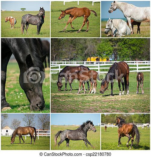 paarden, afbeeldingen, verzameling.
