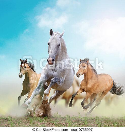 paarden - csp10735997