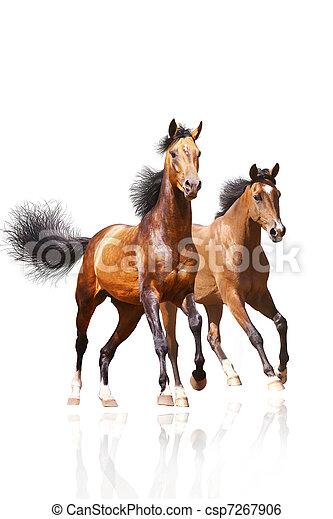 paarden, witte , twee - csp7267906