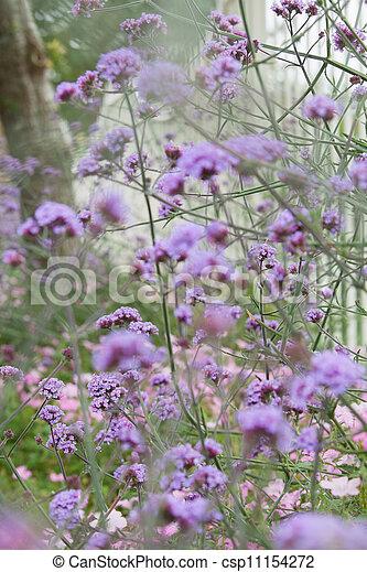 Struiken Met Bloemen Voor In De Tuin.Paarse Struik Bloemen