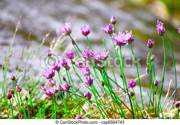 paarse , wilde bloemen.