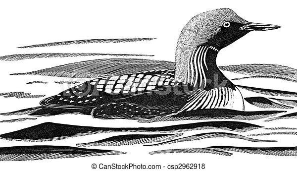 pacific loon gavia pacifica