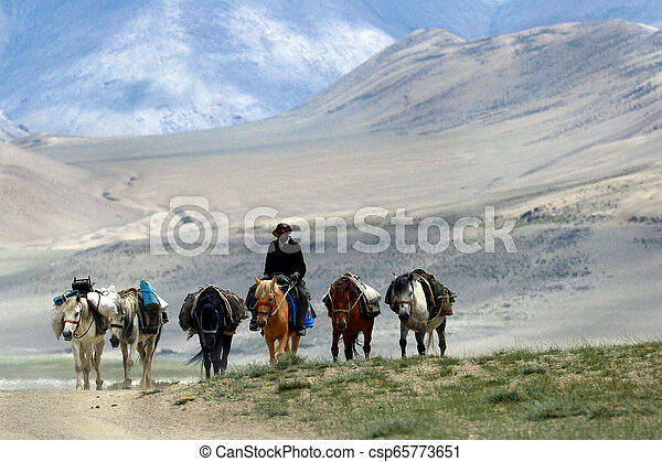 Pack horses and driver ride on the high mountains of the desert: off-road, horses go in row, the person's face is covered with a hat, Tibet. - csp65773651