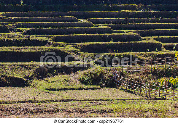 Paddy field after harvest time. - csp21967761