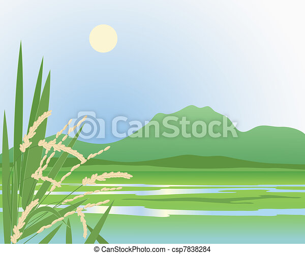 paddy field background - csp7838284