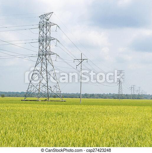Paddy field - csp27423248