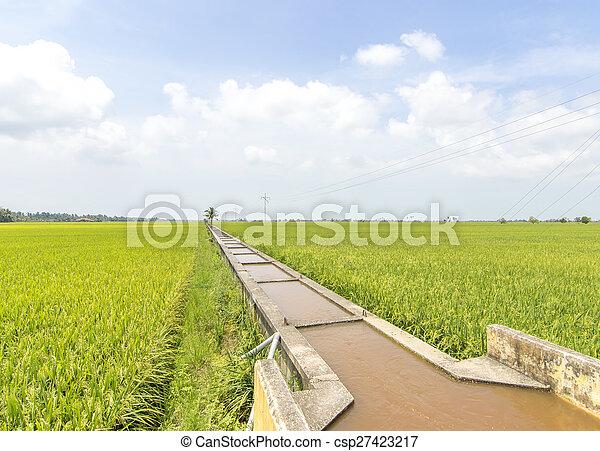 Paddy irrigation - csp27423217