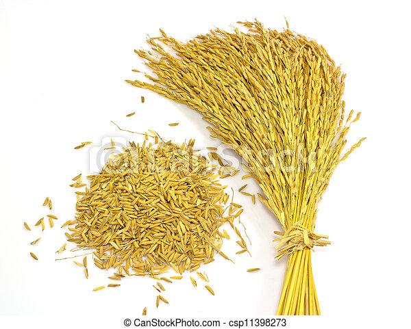 paddy jasmine rice on white background - csp11398273