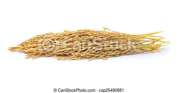 paddy jasmine rice on white background - csp25490881