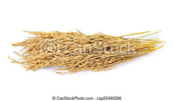 paddy jasmine rice on white background - csp25490266