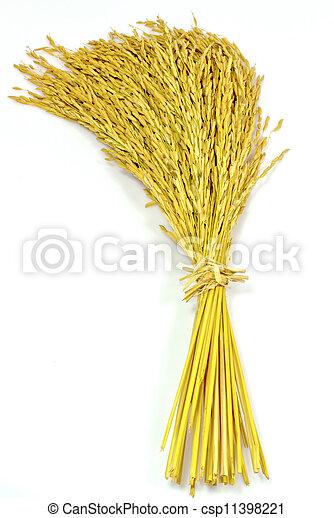 paddy jasmine rice on white background - csp11398221