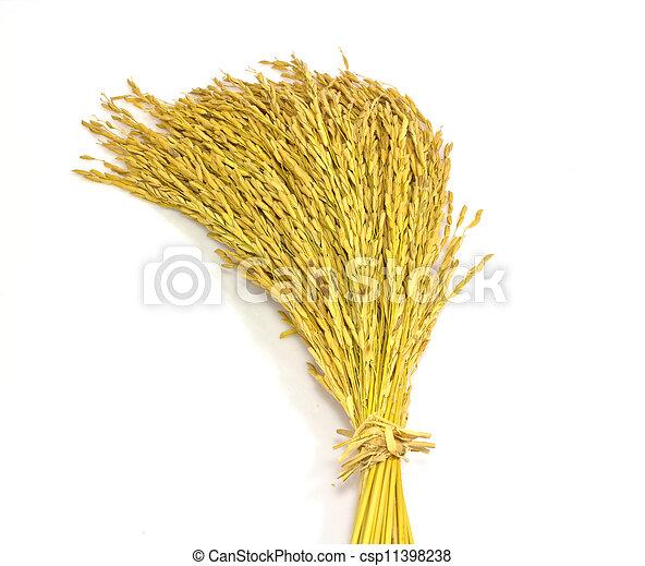 paddy jasmine rice on white background - csp11398238