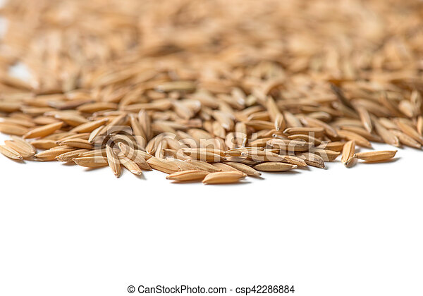 paddy seed on white background - csp42286884