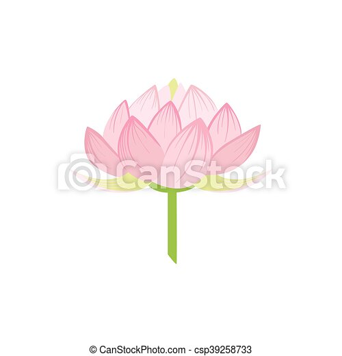 Padma lotus sacred indian flower country cultural symbol padma lotus sacred indian flower csp39258733 mightylinksfo