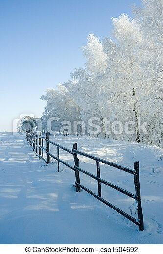 paesaggio, alberi inverno - csp1504692