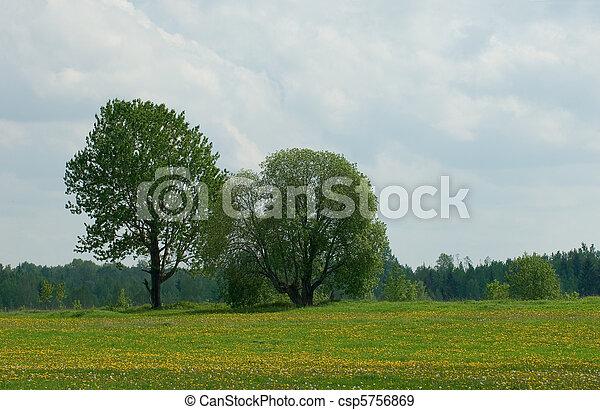 paesaggio rurale - csp5756869