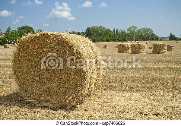 paglia, ungheria, budapest, terreno coltivato, balle - csp7406626