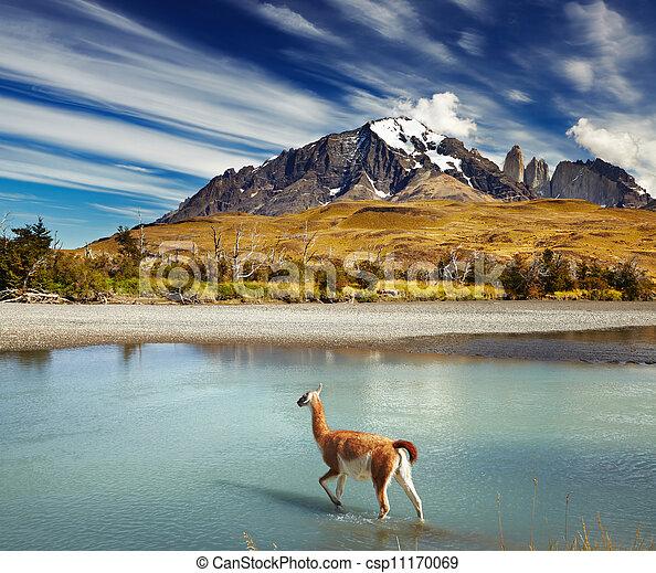 Torres del parque nacional de dolor, Chile - csp11170069