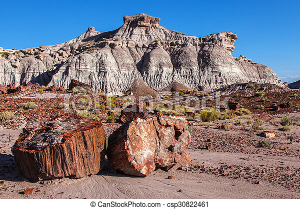 Painted Desert Badlands Petrified F - csp30822461