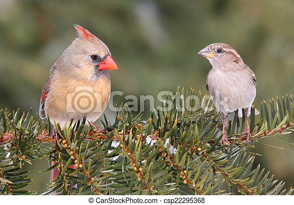 Pair of Birds on a Branch - csp22295368