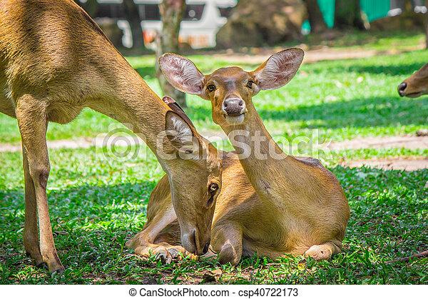 Pair of deer. - csp40722173
