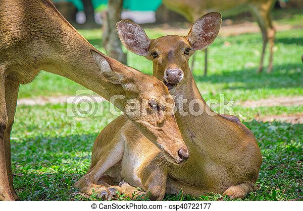 Pair of deer. - csp40722177