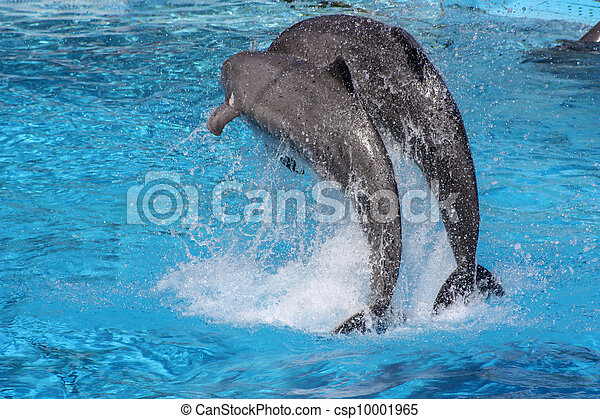 pair of dolphins - csp10001965