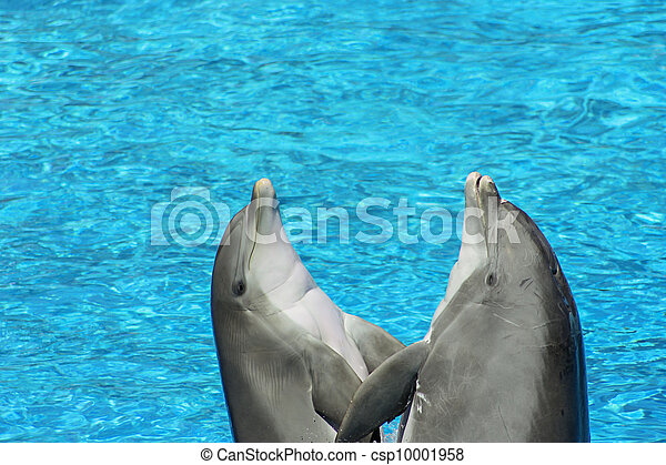 pair of dolphins - csp10001958