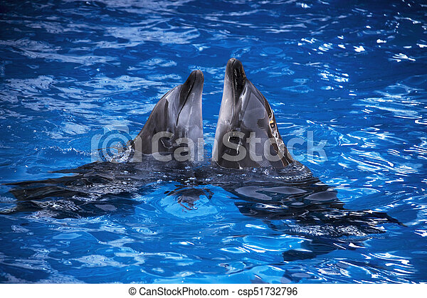 Pair of dolphins swimming in the blue water. - csp51732796