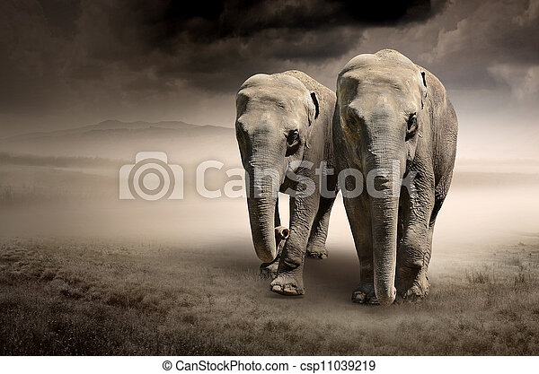 Pair of elephants in motion - csp11039219