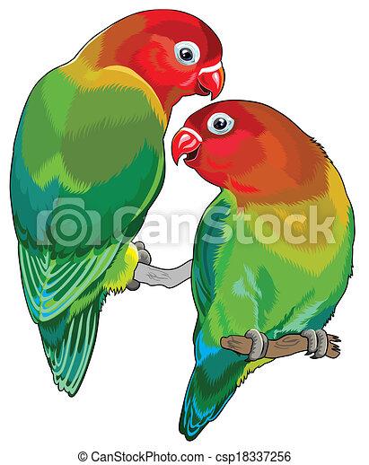 pair of fischer s lovebirds agapornis fischeri two small rh canstockphoto com love bird tree clipart love bird clipart silhouette