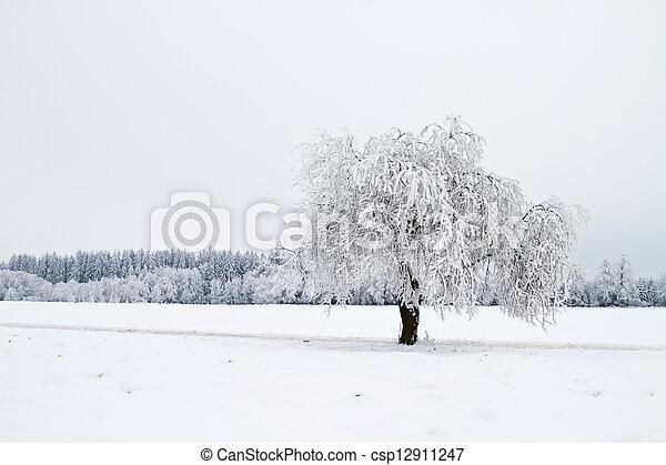 paisagem, árvores inverno, neve - csp12911247